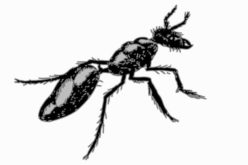 <span>Weekly Tip for June 26:</span> Four Pests You Never Want to See Invading Your Home