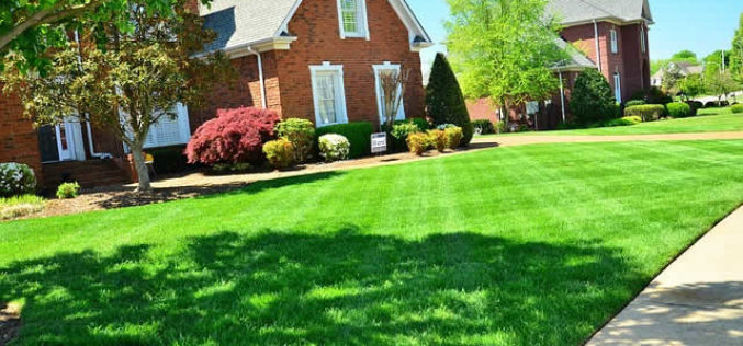 <span>Quick Checklist:    </span> Five Lawn Care Tips That Will Keep Your Yard Looking Fresh