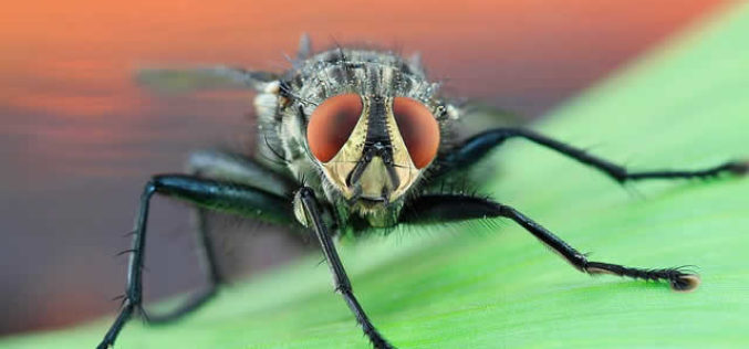 Exterminator: How to Bring Judgment Day Down on the Pests in your Home