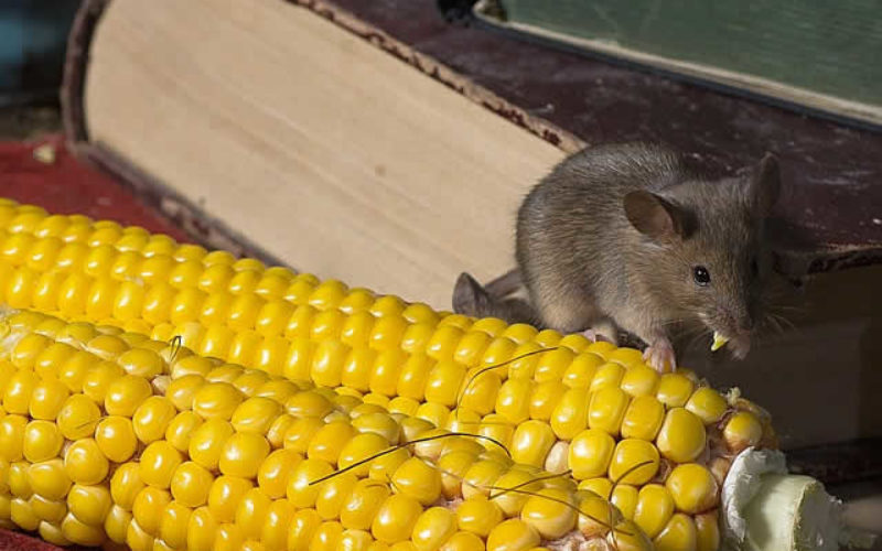 Infestation Detection: Early Warning Signs of Invading Pests