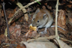 Mouse Hunt: How to Eliminate Rodents From Your Home