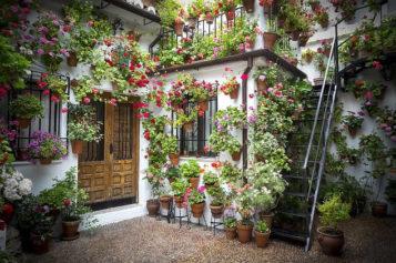 5 Backyard Patio Design Ideas