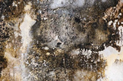 Can You Tackle Mold Renovation on Your Own?