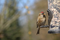 <span>Weekly Tip for Oct 16:</span> Fall Time is Backyard Bird Time