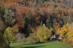 Autumn Weather: How to Maintain Your Home this Fall