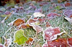 5 Ways to Prepare Your Yard for Winter