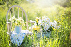 Tips To Choose Best Garden Supplies