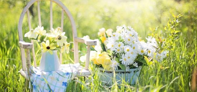 Tips To Choose Best Garden Supplies
