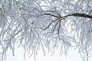 Winter's Toll: How to Take Care of Your Yard through the Cold Months