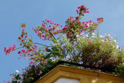 Reasons to Consider Rooftop Gardens