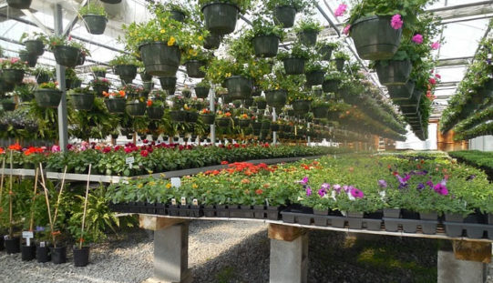 How to Choose a Specialist Plant Supplier for Your Garden?
