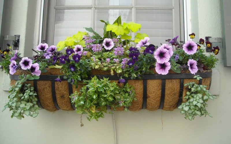 Boost Your Curb Appeal With Custom Window Boxes in 6 Easy Steps