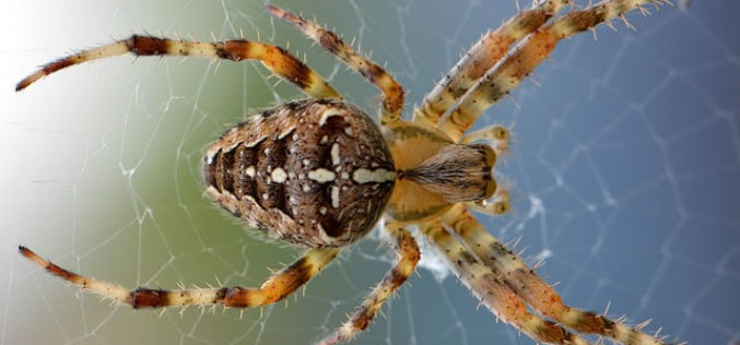Summer Pests: How to Keep Your Home Safe from Critters