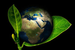 5 Ways to Make Your Construction Process Environmentally Friendly