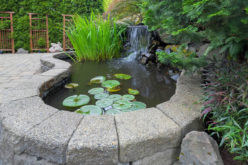 <span>Sunday Morning Tip for July 23:</span> Garden Landscaping