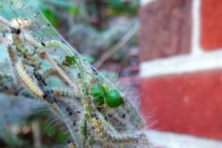 Pest Patrol: How to Keep Creepy Crawlers out of Your Home This Fall