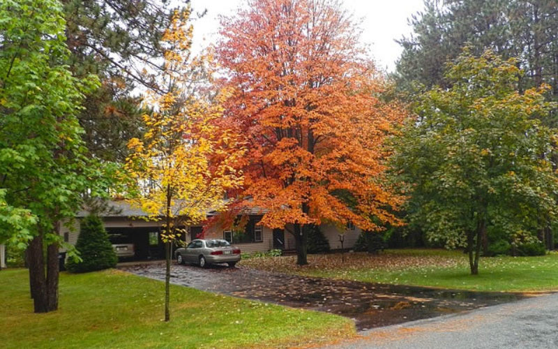 Landscape and Design: How to Get Your Yard Ready for Fall