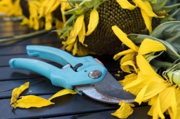 4 Important DIY Pruning Tips for Garden Plants