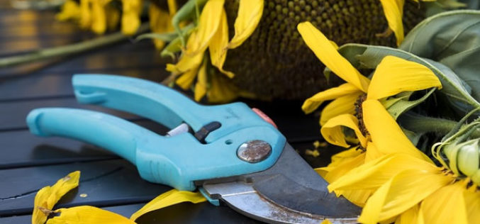 4 Important DIY Pruning Tips for Garden Plants