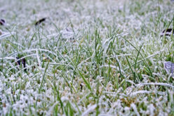 Off-Season Care: How to Get Your Lawn Ready for Winter