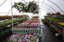 Easy Tips to Find a Quality Plant Nursery