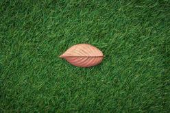 Choosing The Best Artificial Grass For Your Pet