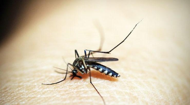 <span>Sunday Morning Tip for Jul 15:</span> Hot Summer Days w/ Summer Pests