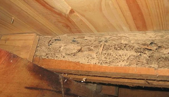 Why Regular Termite Inspection of Your Home Is Essential