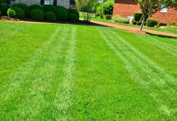 Top-Notch Lawn Care: 5 Ways to Keep Your Yard Green and Clean