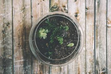 Gardening 101: How to Make a Closed Terrarium