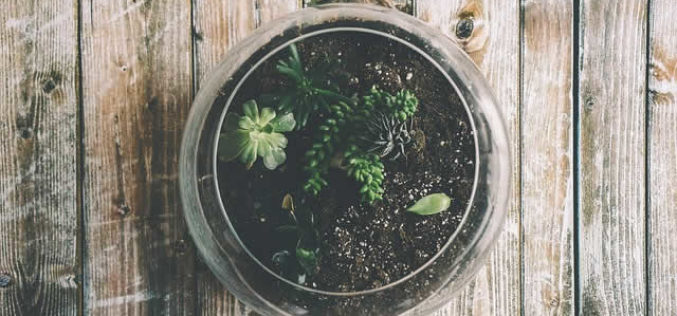 Gardening 101: How to Make a Closed Terrarium