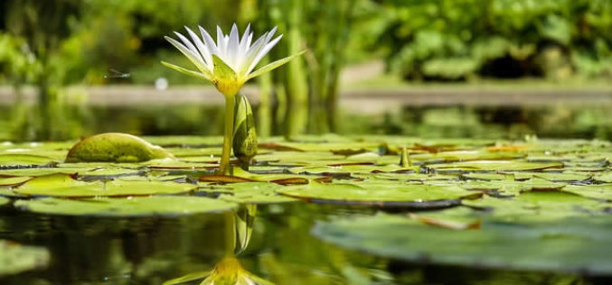 How to Plumb Your Garden with a Relaxing Pond Feature