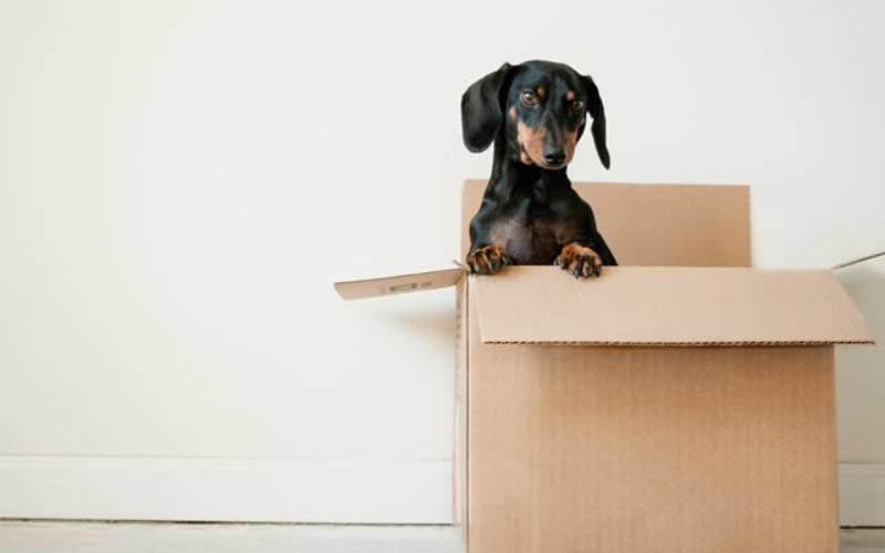 How to Make Moving to a New Place Easier