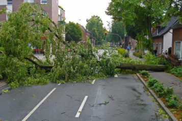 Emergency Roof Repair: 4 Steps to Take After a Tree Hits Your Roof in a Storm