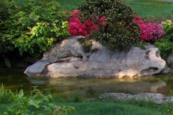 4 Ways to Augment Your Landscape with Water
