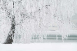 4 Beautiful Options to Continue Your Landscaping Through Winter