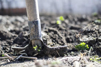 How Redoing Your Garden Can Be a Perfect Complement to Your Remodel