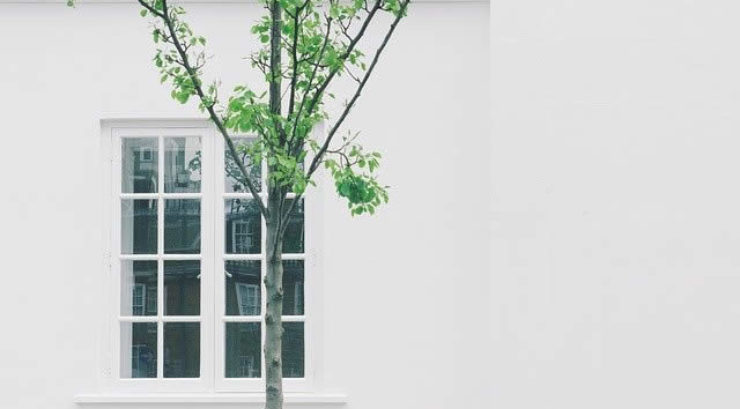 Three Things to Consider Before Planting a Tree Near Your House