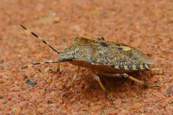 Best Ways to Keep Stink Bugs Out of Your Home