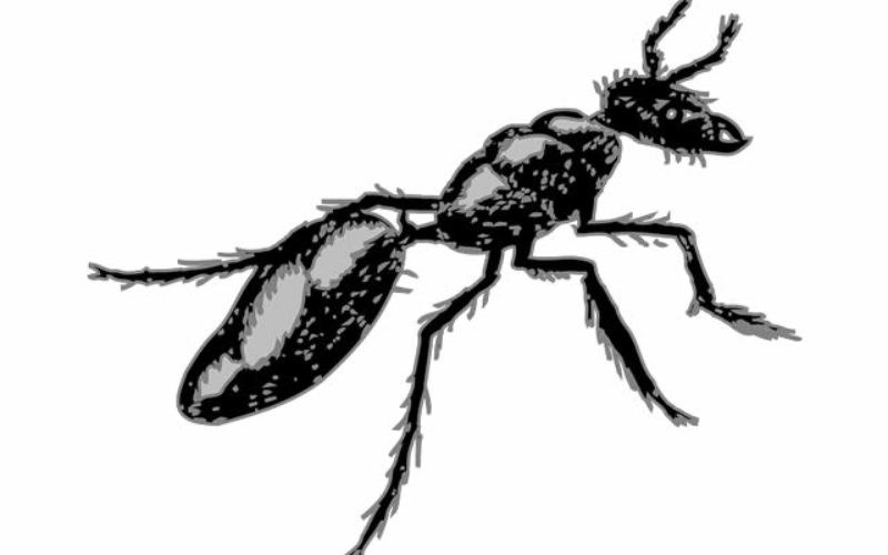 Carpenter Ant Prevention Tips For Your Home