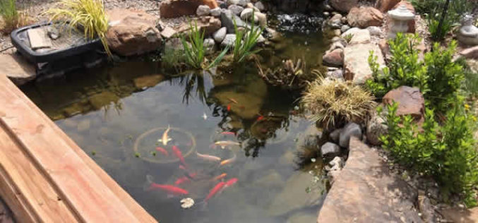 How To Manage Algae in Your Pond