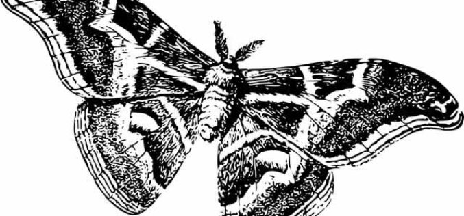 How to Manage Moth Infestations in Nashville