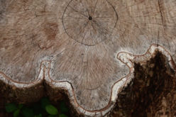 <span>Sunday Morning Tip for April 19:</span> 4 Ways to Renovate a Stump-Filled Lawn
