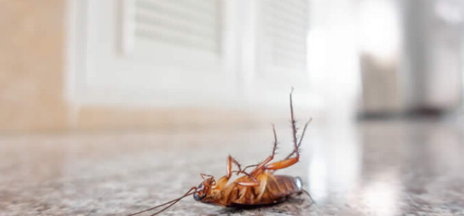 Easy Pest Control Tips That You Can Follow Every Day