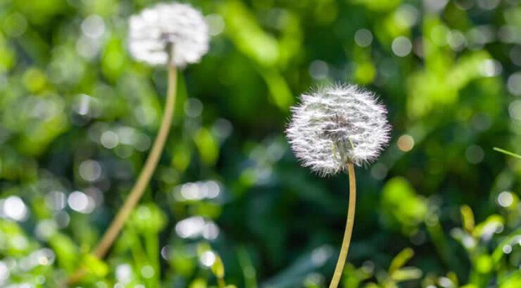 How to Prevent Spring Weeds in Your Mountain Home Garden