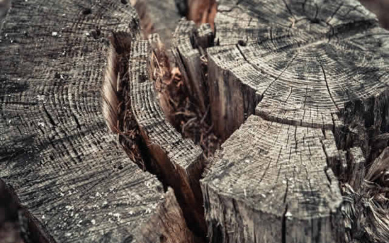 How to Remove a Tree From Your Yard: The Complete Guide