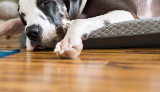 4 Advantages of Using Engineered Flooring for Your Renovation