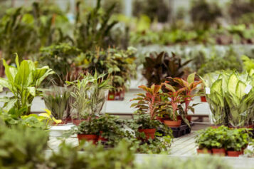 Deciding on The Best Garden Greenhouse for Your Landscape Needs
