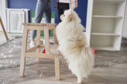 How To Keep Your Pet Safe During a Renovation Project