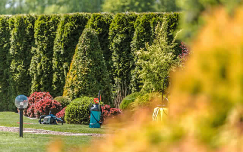 What To Consider When Remodeling Your Yard